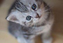 Kitten Cuties :3