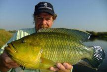 NEMBWE / Fly fishing for Nembwe.  Nembwe on the fly.