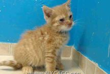 Cat /kitten pet adoptions / Add your Cat and kitty pet adoptions here.