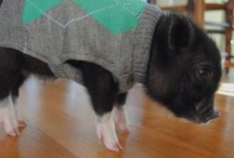 Pig Obsession / by Trish Robinson