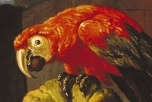 papugi / malarstwo i foto