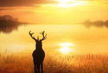 Deers