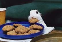 Uartige kaniner / Kaniner er ikke altid helt så uskyldige og søde, som de ser ud til at være. Kaniner er intelligente og nysgerrige dyr, og selvom vi gør hvad vi kan for at aktivere og stimulere dem, får de alligevel til tider nogle fikse idéer. Det kan sætte tålmodigheden på prøve, men det er skam også en betydelig del af deres herlige væsen, vi holder så meget af.  Husk altid at kaninsikre dit hjem