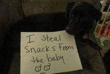Very bad dogs!