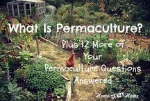 Premaculture