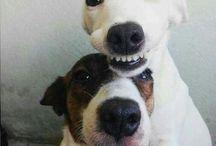 Cães em fotos