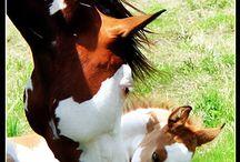 Animales que adoro / animals