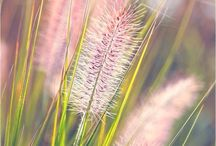 FLOWERS FOR BEAUTY / Seeking beauty in nature, seeking comfort