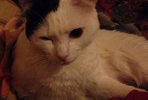 Il mio gatto / Occhiolino