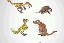 Evolution  / by Desiree Baez