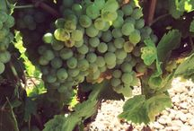 RUEDA Vineyards