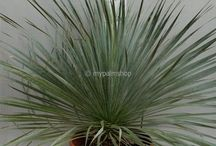 Palmen en olijven, fruitbomen