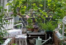 Have og drivhus