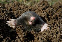 Mole killer