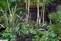 Sujan's Garden