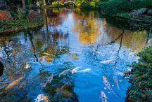 Koi Pond / by April Lewis