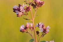 Wildkräuter-Kalender September / Wildpflanzen-Erntekalender für den Monat September