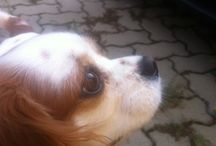 Cats & Dogs / Gatti e Cani :-)