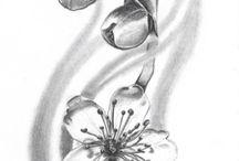 Kersenbloesems
