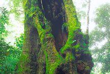 Fantastic tree ♡