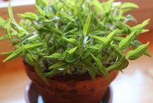 Microgreens, sprouts etc