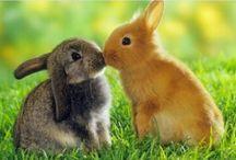 Hayvanlar alemi #tavşanlaralemi