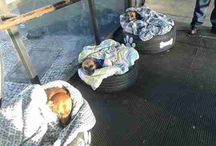 dogs: tyres for cozy bed.