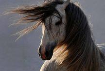FANTASTIC BEAUTY HORSES