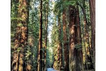 Humboldt Redwoods State Park / by CA State Parks