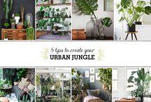 Blog Studio Baobá