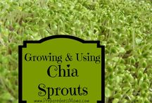 Sprouting & Microgreens