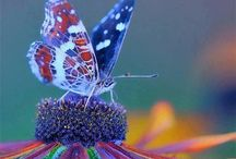 Beautiful butterflys / by Nicole Craffey