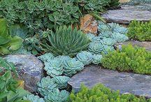 Jardin (association plantes)