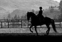 Horses / by Deborah LaTour