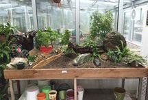 Sergi Limonluğu / İç mekan, bitki, eğrelti, orkide, sarılıcı, tırmanıcı, etli bitkiler, sukkulent