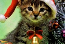 vianočné video pozdravy