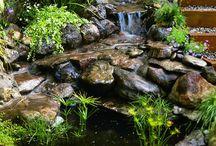 puutarha / Kuvia unelmien puutarhasta