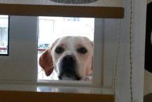SIMBA OUR DOG / I LOVE MY DOG !!!!