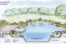 pool/pond / pool for us, pond for the farm