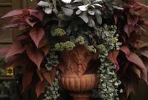 Garden Urns and planters / by Pam Kelley