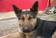 Doggie info / by Charlene Balkema