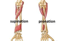 Pronation Supination Arm
