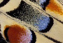 Fjäril och fjäder