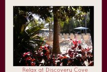 Sea World and Discovery Cove