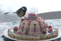 vogelvoer
