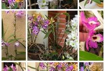 Cuidar de plantas é tudo de bom / Adoro plantas. Estas plantas e jardins me chamaram a atenção!!