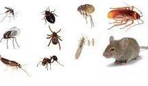 Contra insectos