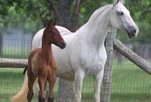 Mooie Paarden / by Marentje