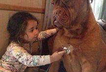 Seres vivos / animales muy humanos