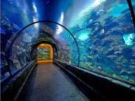 Aquarium Tunnels / Underwater tunnels can add a magical dimension to your aquarium design by immersing spectators directly inside the realm of aquatic wildlife.
